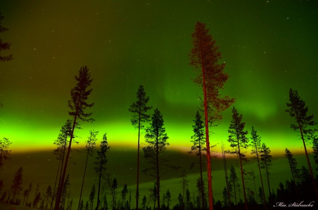 THE ENCHANTED FOREST: INSPIRING AURORA BOREALIS OVER SWEDISH SKIES
