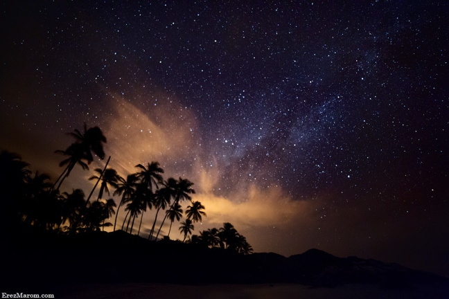 PALMS OF THE MILKY WAY